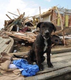 Damage in Tuscaloosa June 2011