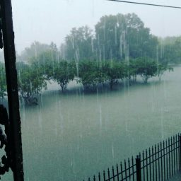 Hurricane Harvey13
