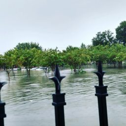 Hurricane Harvey14