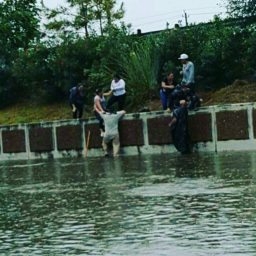 Hurricane Harvey8