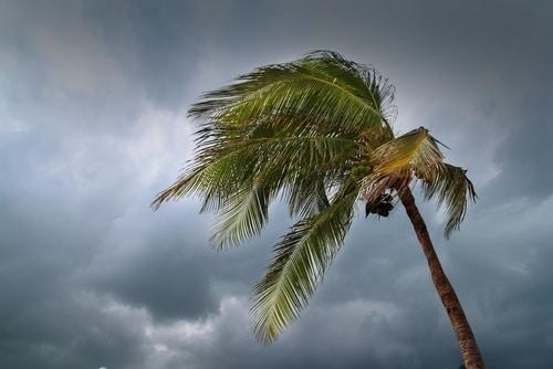 south west florida storm damage